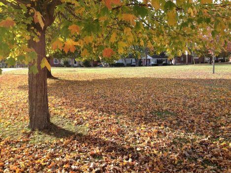 autumn a