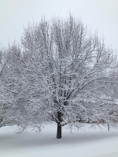 tree in snow a