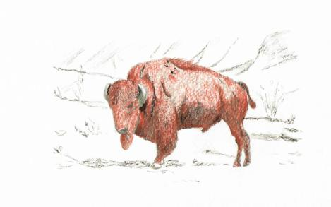 buffalo pencil