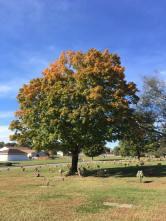 Cemetery 10222017