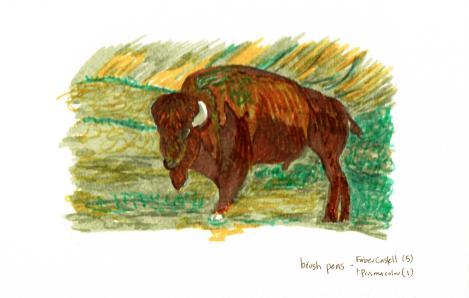 buffalo pen