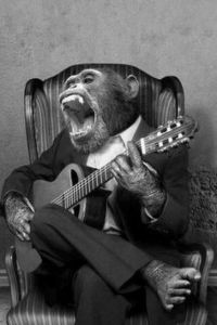 music for monkeys